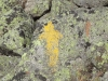 Gulfside Trail Yellow Blaze