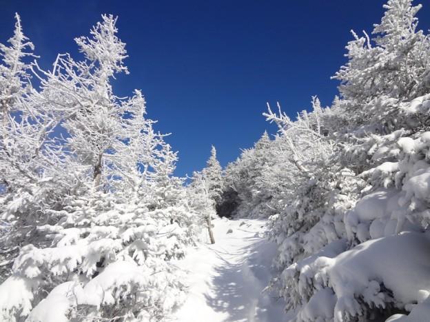 Frozen Krummholz on Mt. Lafayette Old Bridle Path