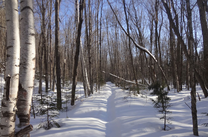 Wilderness Trail in Winter