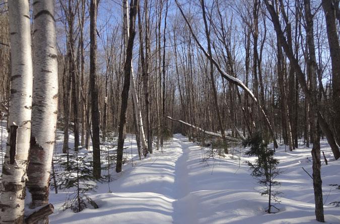 Wilderness Trail in Winter